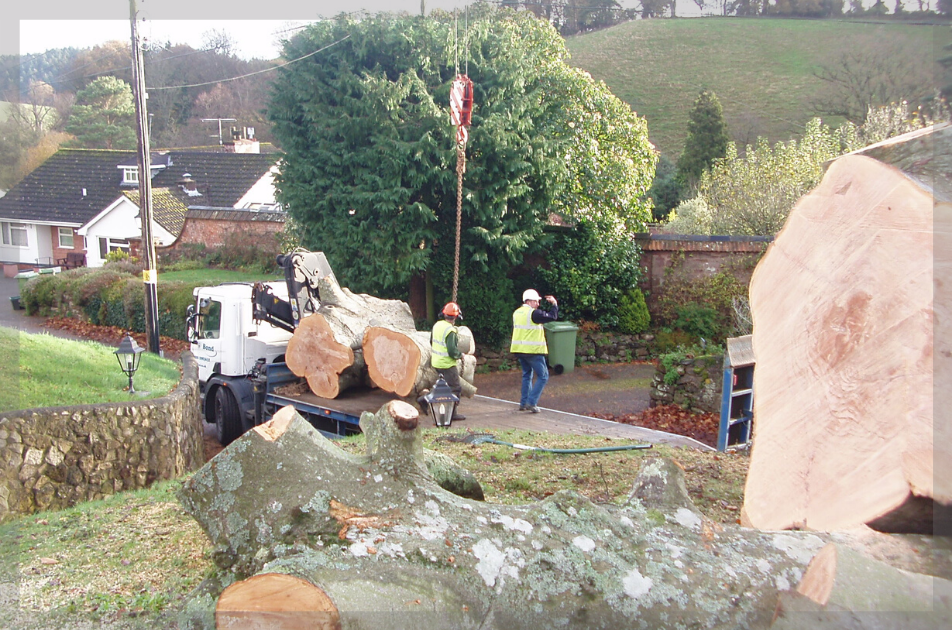 tree-maintenance-exeter